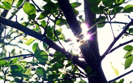 Trees, green leaves, sun rays, shine