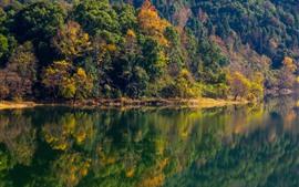 Árboles, lago, reflexión del agua, otoño