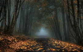 Trees, leaves, path, channel, fog, morning, autumn