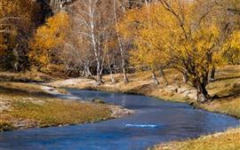 Árboles, río, otoño, naturaleza.