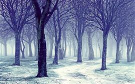 Árboles, nieve, niebla, invierno, mañana