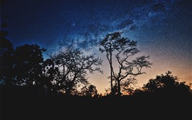 Preview wallpaper Trees, starry, night, silhouette