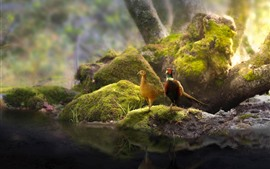 Preview wallpaper Two pheasants, couple, pond, stones, moss