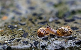 Preview wallpaper Two snails, insect, hazy