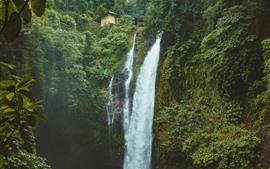 Cachoeira, árvores, verde