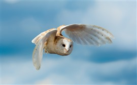 Preview wallpaper White owl flight, wings, sky