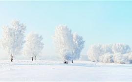 Mundo branco, árvores, neve, inverno