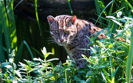 Preview wallpaper Wild cat look back, plants, green