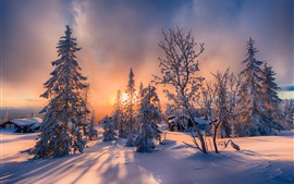 Winter, snow, trees, house, sunset, shadow