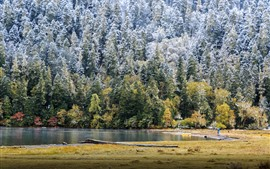 Зима, деревья, снег, озеро, холодно
