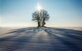 Invierno, árboles, sol, sombra, nieve