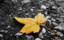 Preview wallpaper Yellow maple leaf, water droplets, ground