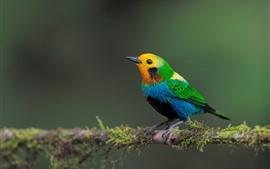 Hermoso pájaro, plumas de colores