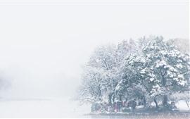 Inverno bonito, árvores, rio, neve, névoa, manhã, nebuloso, China
