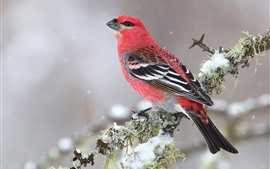 Preview wallpaper Bird, red feather, tree branch, snow