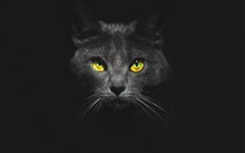 Gato negro, cara, ojos amarillos, oscuridad.