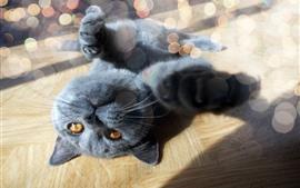 Preview wallpaper Black cat, hazy, light circles