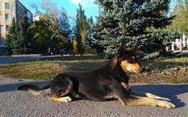 Black dog rest, sunshine