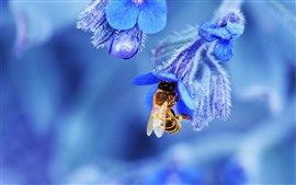 Preview wallpaper Blue flowers, bee, macro photography