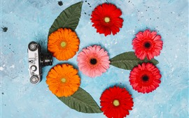 Preview wallpaper Camera and gerbera flowers