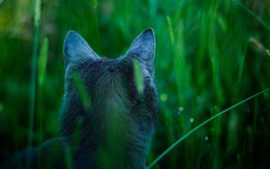 Preview wallpaper Cat back view, ears, grass