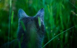 Vista posterior del gato, orejas, hierba.