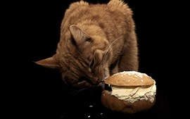 Cat eat sandwich, black background