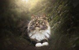 Preview wallpaper Cat in the nature, hazy