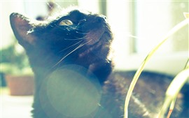 Cat look up, sunlight