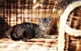 Preview wallpaper Cat rest on chair
