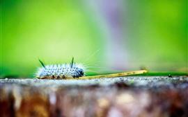Preview wallpaper Caterpillars macro photography