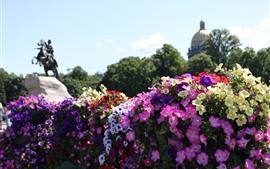 Flores coloridas, parque, cidade