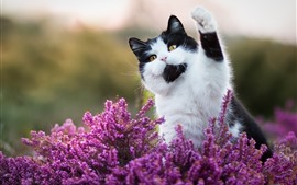 Preview wallpaper Cute cat, pink flowers, hello, funny animal