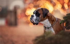 Cão bonito, círculos do brilho