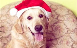 Cão bonito, olha, chapéu de Natal