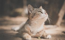 O gatinho bonito olha acima, animal de estimação