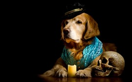 Preview wallpaper Dog, hat, clothes, skull, black background