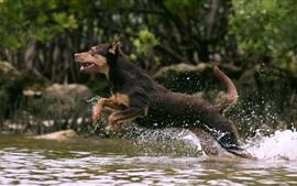Cachorro correndo na água do riacho