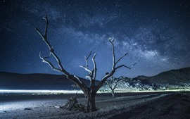 Dry trees, beach, night, starry, beautiful sky