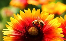 Flor, pétalas, abelha