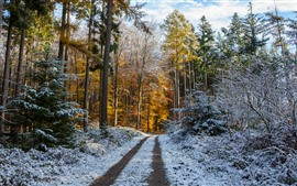 Preview wallpaper Forest, trees, path, snow, winter