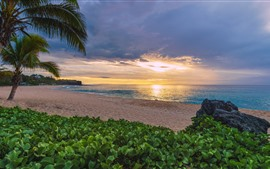 Preview wallpaper France, Indian Ocean, sea, beach, palm trees, plants, sunset