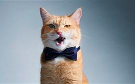 預覽桌布 有趣的貓,領結