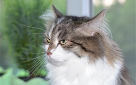 Пушистый котенок, лицо, глаза