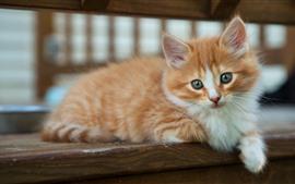 Пушистый котенок, смотри, лапа