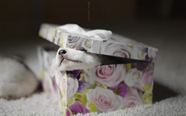 Preview wallpaper Gift, box, puppy