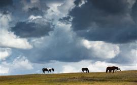 Pastagem, cavalos, nuvens, céu