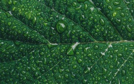 Preview wallpaper Green leaf close-up, water droplets, texture