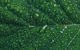 미리보기 배경 화면 녹색 잎 클로즈업, 물방울, 질감