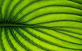 Preview wallpaper Green leaf, stripes